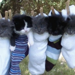As per a specific request, I give you Kittens In Socks