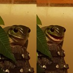 One of my adorable frogs, Kip!