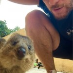 Went for a 50km cycle today. Stopped for a break with this curious quokka.
