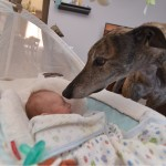 My greyhound meeting my son