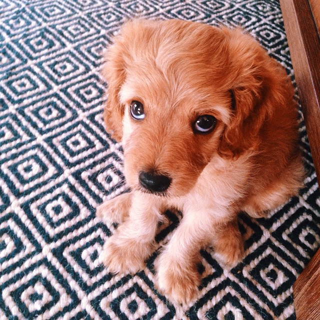 """This little bugger has perfected """"puppy dog eyes."""""""