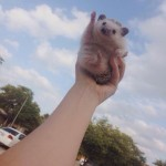 Hedgehog to the sky!