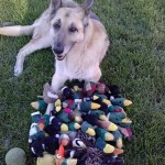my_dog_tore_apart_every_toy_duke_a_years_worth_of