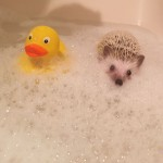 Can't bubble bath with out your rubber ducky
