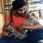I was attacked by a leap of leopards while volunteering at a safari park