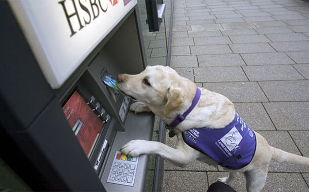 dogs-protect-atm-104-59cb50381d4dc__605