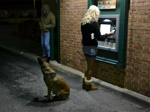 dogs-protect-atm-107-59cb556b1cf86__605